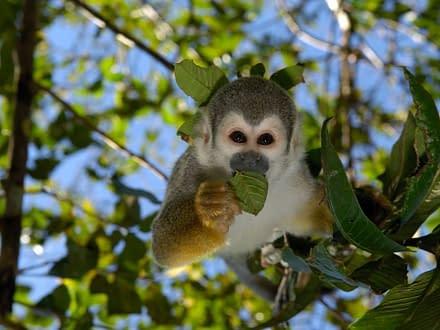 Amazonas Entdeckerreise 4
