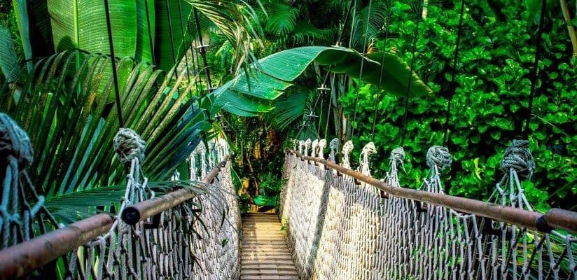 Amazonas Brücke 1