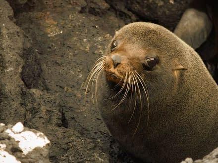 5 Tage Galapagos Nationalpark 5