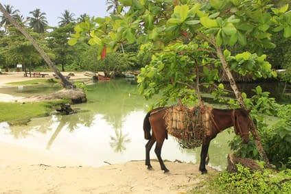 15 Tage Reiten Dominikanische Republik 6