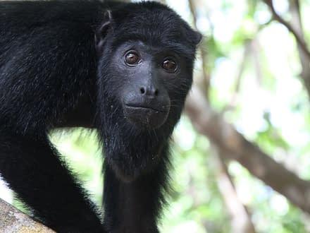 Survival Tour Amazonas 5