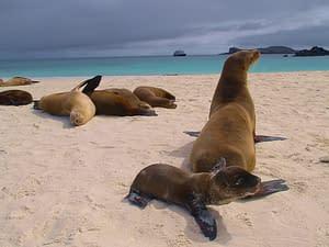Die Inseln der Galapagos mit anderen Augen entdecken! 1