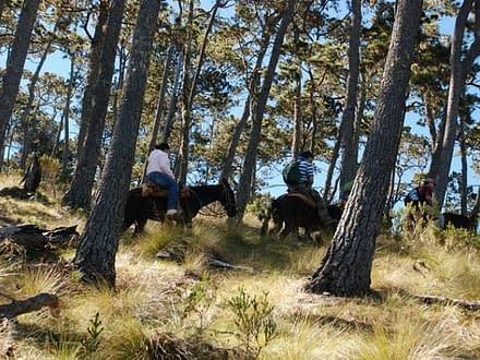 Pico Duarte Trekking 7