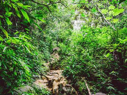 Wildes Brasilien - Amazonas, Pantanal und mehr... 8