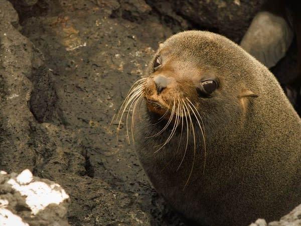 5 Tage Galapagos Nationalpark 1