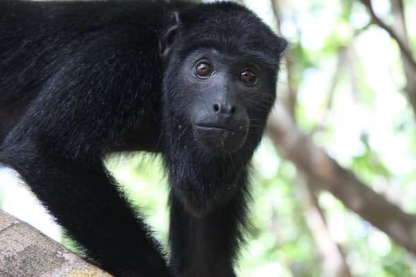 Survival Tour Amazonas 1