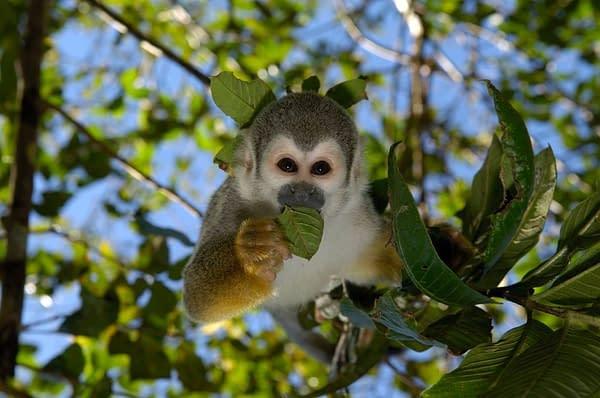 Amazonas Entdeckerreise 1