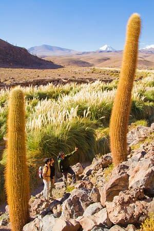 Der Norden Chiles 6
