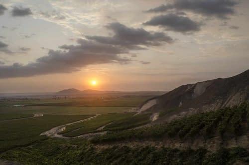 Weinberge in Ica Peru