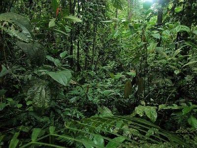 3 Tage Madidi Nationalpark 4